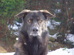 Snow and dogs 3 FEB 2009 023 (lovekaatz) Tags: utonagan