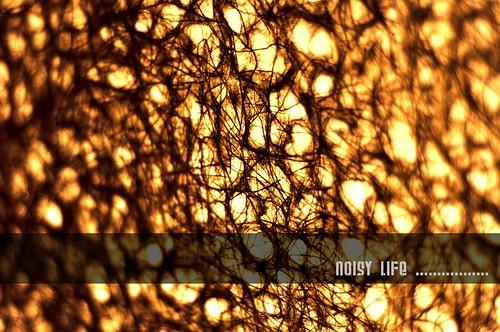 noisy life........... by rexmen.