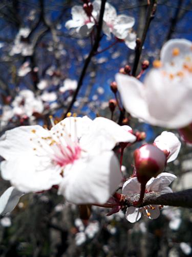 spring-in-Valencia