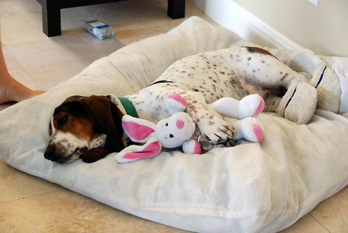 sleeping with my bunny by Sampson