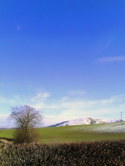 Great day again (lucyphotography) Tags: uk blue tree field project scotland spring hill perthshire days 365