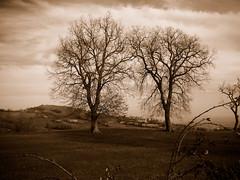 ....trees on sepia..... (rebranca46) Tags: trees friends italy panorama sepia alberi landscape silhouettes campagna 2009 marzo ohhh pictureperfect mywinners mywinner rebranca platinumheartaward savignanomontetassi