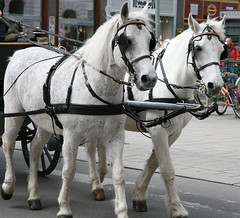 IMG_0817 (Sniper_Kitty) Tags: vienna horses carriage pferden