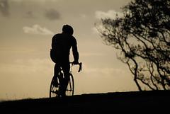 Pedalling (Daniele Sartori) Tags: voyage new trip travel sunset newzealand tree bicycle one nikon tramonto cyclist hill auckland zealand journey ciclista bici viaggio zelanda collina nuova bicicletta ici onetreehill oceania nuovazelanda zlande d80 nikond80 nuovelle nuovellezlande