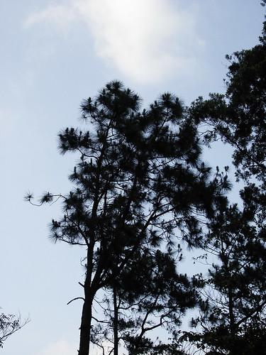 2009-5-1 新竹秘密基地 021