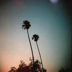 Palms, Sunset