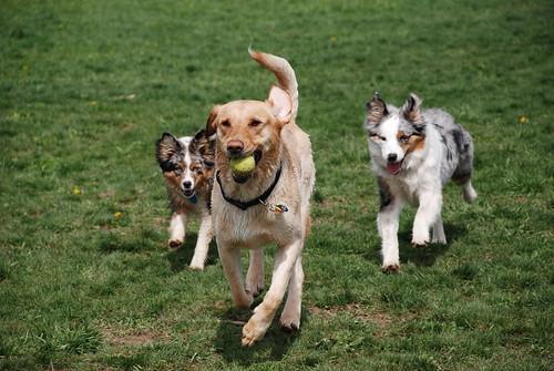 Fun at the dog park