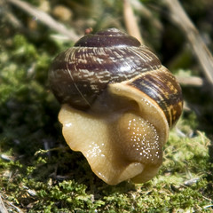 Dressed for Her Date tonight (ToveM) Tags: brown green nature slow snail skirt slowmotion