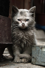 Zengchong Kitty (morten almqvist) Tags: china cat kitten pussy sigma dirty guizhou 1530mm sd14 bestofcats zengchong sigma50th