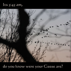 Its 5:45 am, do you know were your Geese are? (NaPix -- (Time out)) Tags: trees lake canada nature birds silhouette sunrise landscape dawn geese quebec bokeh flock north flight goose explore loons karma loon flymetothemoon migrating flyawayhome goldengarden explored hbw twtme shouth exploretopten flyinginavformation canonef70200mmf4lisusm napix canonxsi its545amdoyouknowwereyourgeeseare loonsinflight howmanygeesecanyoucount mexico–canadamigration us–canadamigration