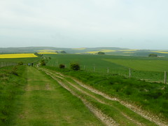 The Ridgeway at Avebury Down