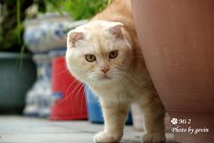 DSC07217 (gevin lee) Tags: zeiss cat sony dslr 貓 a350 sal1680z sonya350