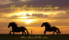 Ameland , Friese Paarden (The Family Dog) Tags: horses horse caballos fries ameland cavalo equine paard paarden frisian equines friese tropillas pferden tropilla friesische
