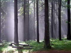 Nebel und Sonne im Wald (AK_74) Tags: nebel wald bume feldberg