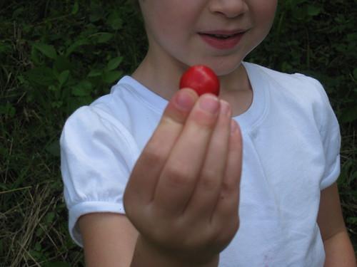 cherry 031