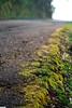 road algae (jasonlouphotography) Tags: nature cameronhighlands sgpalas