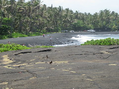 Punalu'u Beach (with common mynahs)