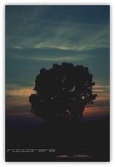 sensaciones (© Delsool) Tags: primavera canon arbol atardecer huelva colores cielo nubes silueta f56 junio 0006 sensaciones mazagon canoneos400d 51mm delsool