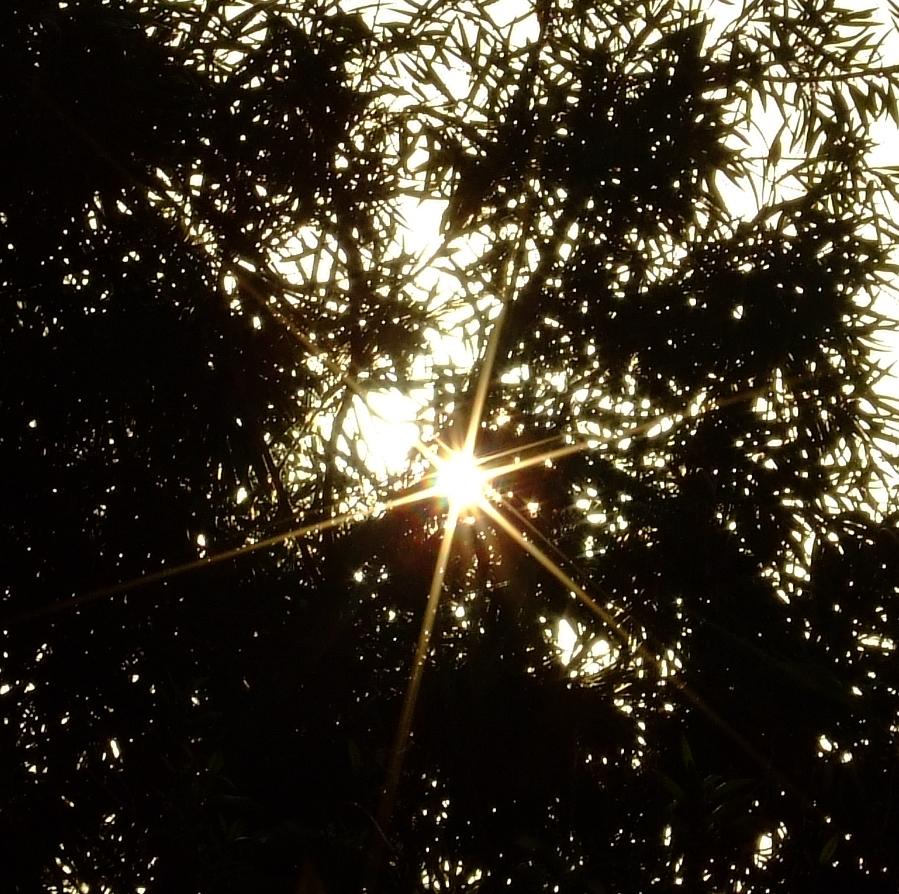 sun pic 02