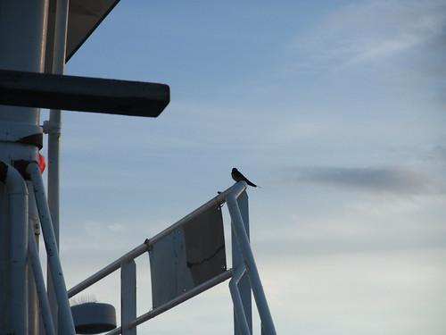 swallow by the wheelhouse