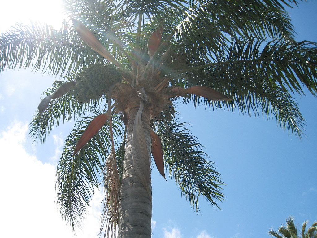 backyard palm tree+sun