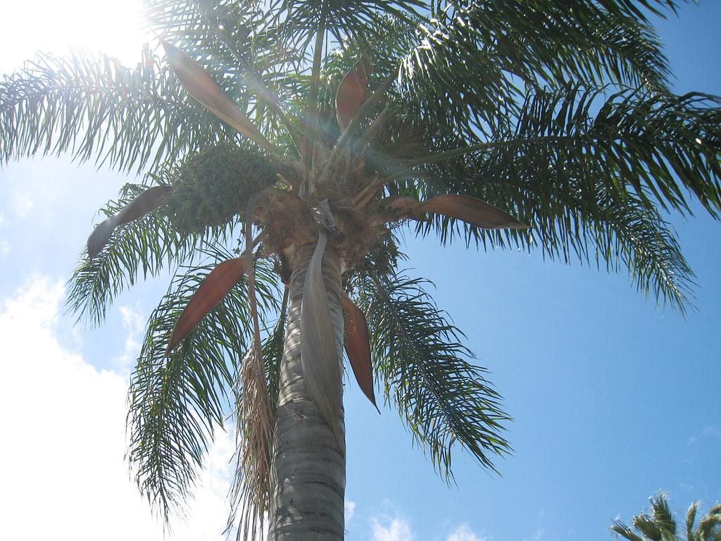 backyard palm tree+sun
