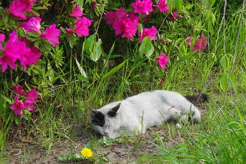 Today's Cat@2010-05-05