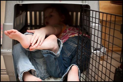dog cage1