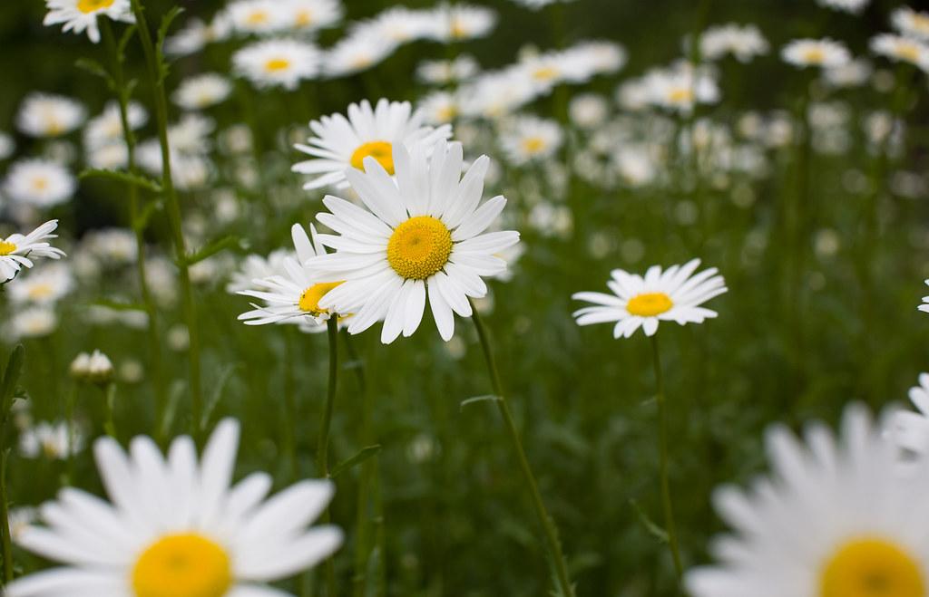 IMAGE: http://farm4.static.flickr.com/3315/4585269821_6f8469ee52_b.jpg
