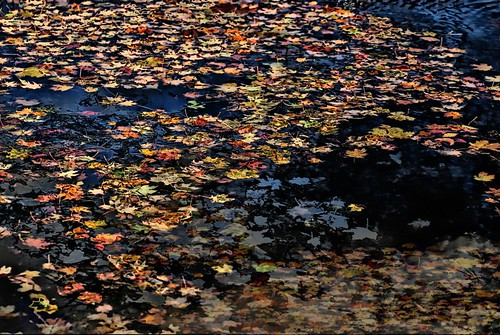 Floaters - autumn leaves floating in a black background, composed of multiple layers
