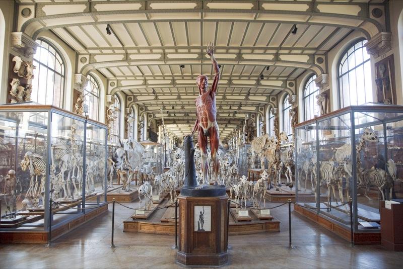 Morbid Anatomy The Secret Museum Photography Exhibition