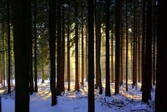 wo ist der Wald? (Stephi 2006) Tags: great hdr januar photomatix pentaxk10d winterwelt smcpda1645mmf40edal