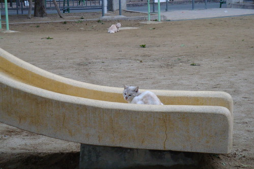 すべり台の猫