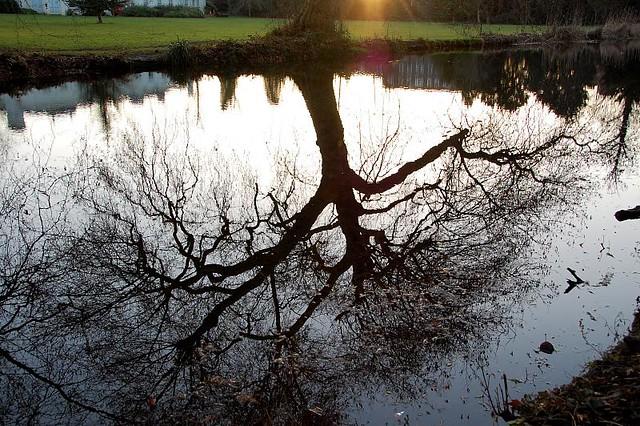 24/365 - Tree time