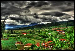 HDR: vegetables plantation #1