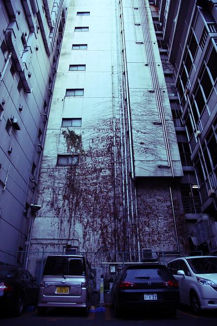 ビル外壁のツタ模様