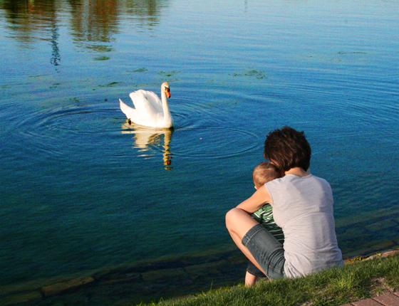 conagra lake 560