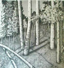 aspens drawing