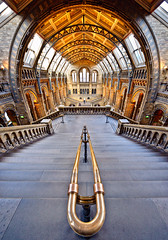 Natural History Museum (Philipp Klinger Photography) Tags: uk windows roof light shadow england people distortion color london history window colors metal stone museum architecture stairs island nikon colorful europa europe angle natural britain south great wide rail ceiling national british kensington railing philipp sigma1224mm nhm ballustrade klinger nofisheye nohdr aplusphoto d700 dcdead unusualviewsperspectives