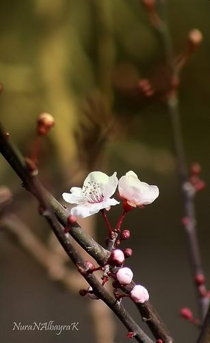 Selcuk Abinin Kaleminden Flickr Lovers Flickr I Sevenler