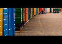 (GaryTumilty) Tags: blue red dog colour green beach yellow huts whitby letterbox colourful leash lead