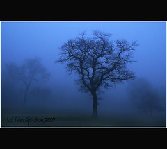 Mist Shrouded Trees - Camperdown - Dundee - Scotland (Magdalen Green Photography) Tags: trees nature misty scotland moody dundee scottish tayside coolness camperdown haar camperdownpark dsc4374 iaingordon picturesofdundee coolmistytrees mistshroudedtrees dundeephotography imagesofdundee dundeestockphotography printsofdundee