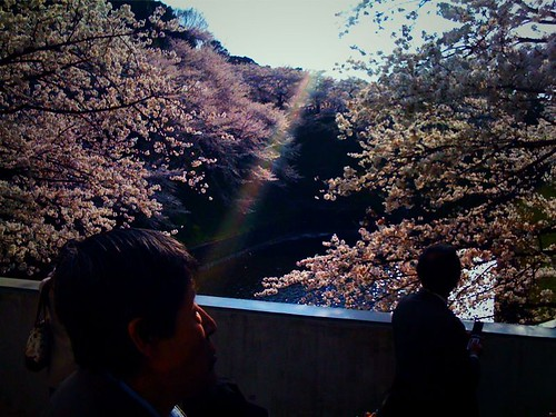 Sakura and Sunbeams