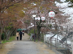 DSC02285 (L I S S Y) Tags: kyoto teaceremony uji