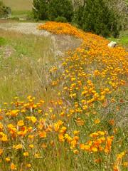 California Spring (Aldene.Gordon) Tags: california spring