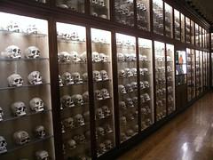 Cráneos guanches en el Museo Canario