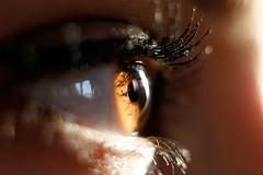 [through.her.eyes] (Kikka (Federica Panniello)) Tags: color macro eye canon eos 50mm colore mary f18 occhio miele autumnleaf ciglia kikka 400d