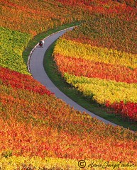 Autumn colors (hgviola ) Tags: autumn red orange colors yellow germany way deutschland evening abend couple colours stripes herbst paar 100v10f vineyards vin soiree jalan allemagne vino weg wein farben streifen heilbronn anggur jerman weinberge drrenzimmern hgviola