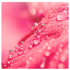 Happy lovely Monday (Michaela Rother) Tags: birthday pink light macro colors rain lens droplets drops dof bokeh rainy michaela rother tamaron