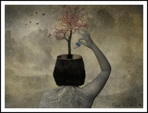 El árbol de la sabiduría / Wisdom tree